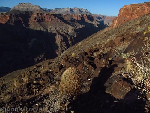 Barrel cacti along the Lava Falls Route, Grand Canyon National Park, Arizona