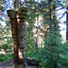Barley, Aitken Wood - Pendle Sculpture Park (4)