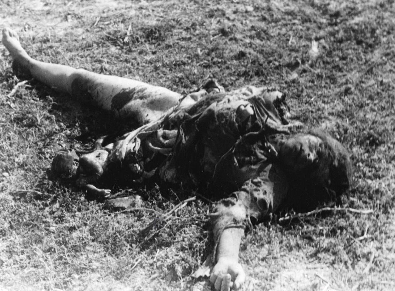 1941. Тело женщины и ее нерожденного ребенка, погибших в результате немецкой бомбардировки по советской колонне между Белостоком и Волковыском