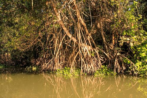 Río Arriba (35)