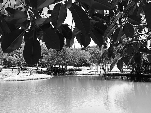Walk in the Carmo's Park