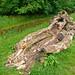 Newark Park, Gloucestershire, National Trust