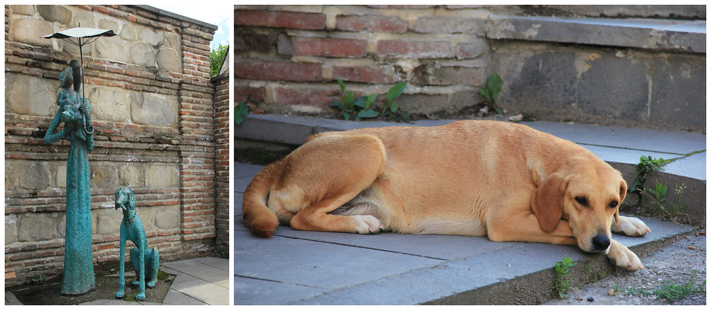 For the love of dogs, Signaghi