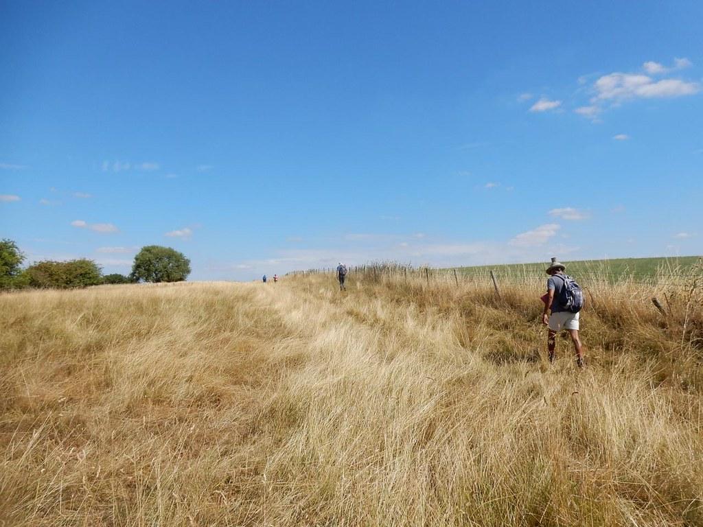 The Buckinghamshire Serengeti Aylesbury Vale Parkway to Aylesbury