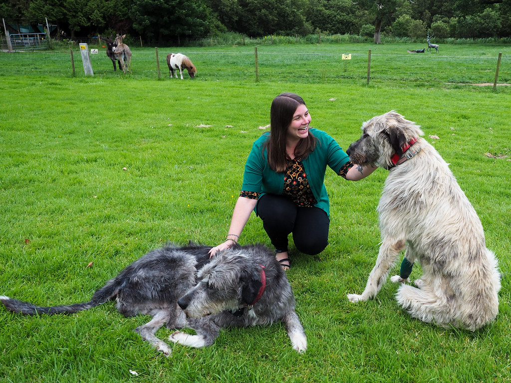 Amanda with Irish wolfhounds
