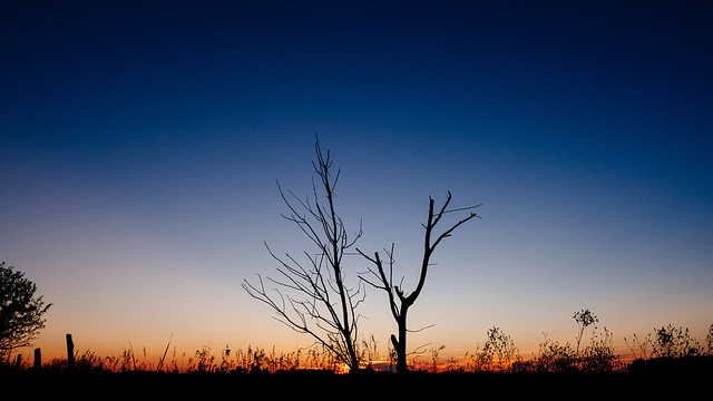 222 365 Dead trees, Fujifilm X-T2, XF16mmF1.4 R WR