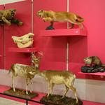 Trenton, NJ - New Jersey State Museum - Mammals