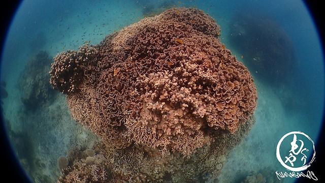美ら珊瑚!!!!