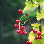 2018:06:17 14:22:49 - Fruit Garden Bokeh - Schleswig-Holstein - Deutschland