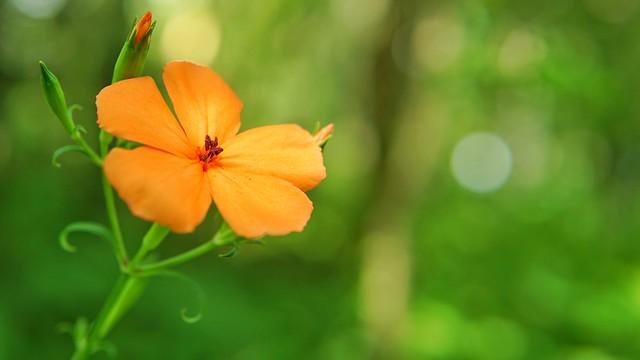 湿生花園DSC09911-02