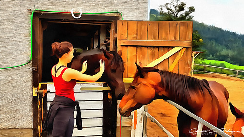 The Lass and Her Horses