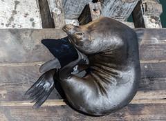 Seal Nails