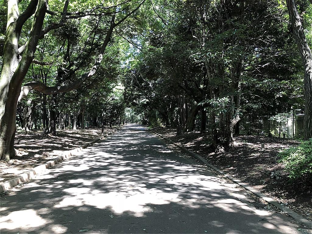 20180701_光が丘 (1)