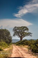 Zambia 2018-156.jpg