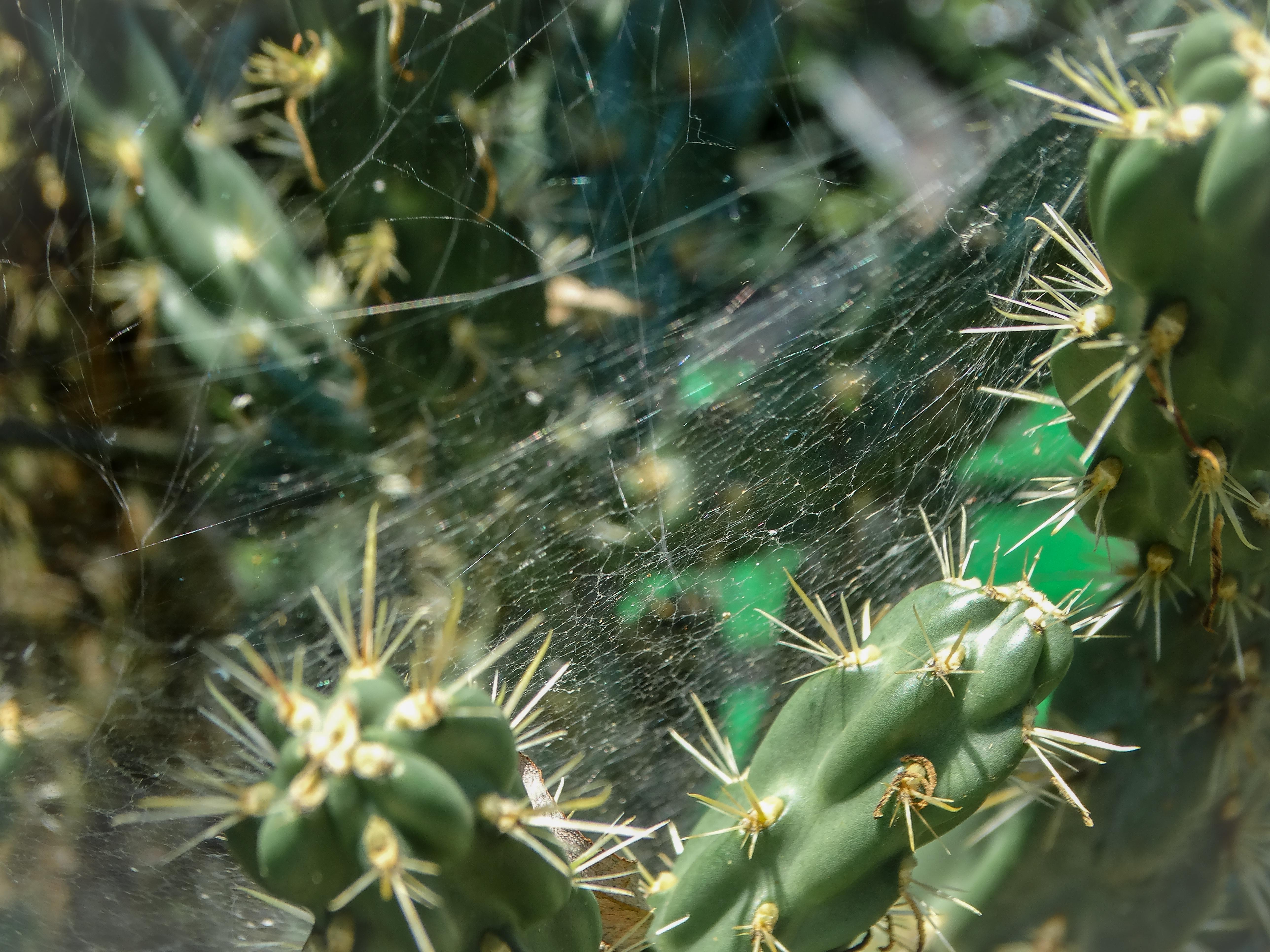 Pókháló kaktusszal 1.