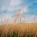 Cliché long grass photo by lomokev