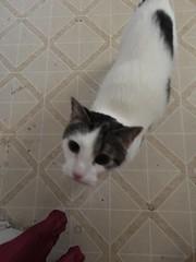 One of the grandcats - Sisqo