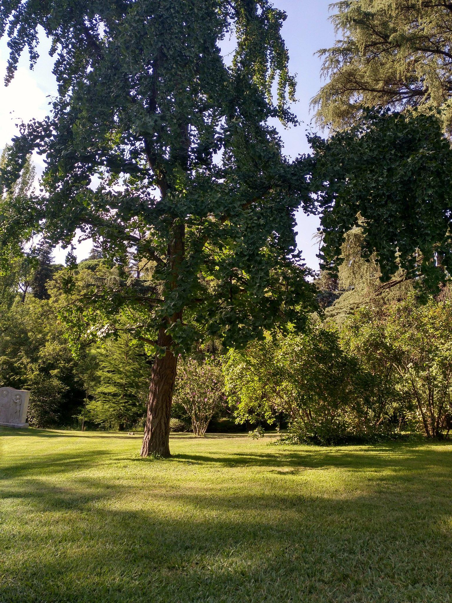 foto-árboles