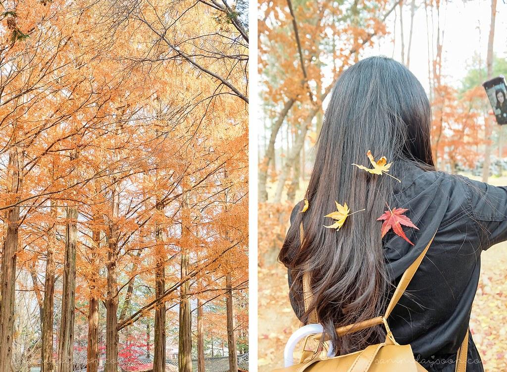 nami_island_autumn_korea