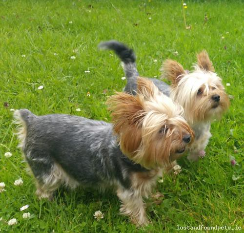 [Reunited] Wed, Aug 1st, 2018 Lost Male Dog - The local area, Moone, Kildare