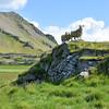 Ewe and lamb, Ær með lamb, Sauðfé