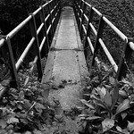 Footbridge Flickr150618M9 7