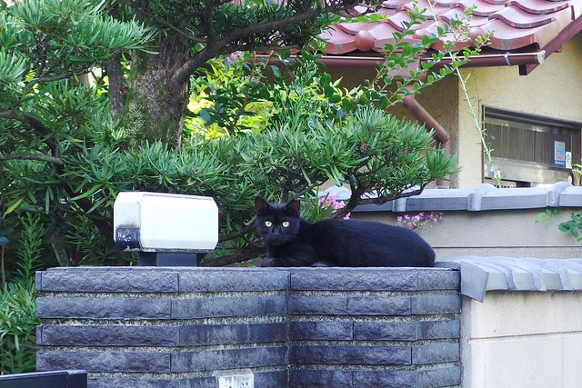 Today's Cat@2018-08-01
