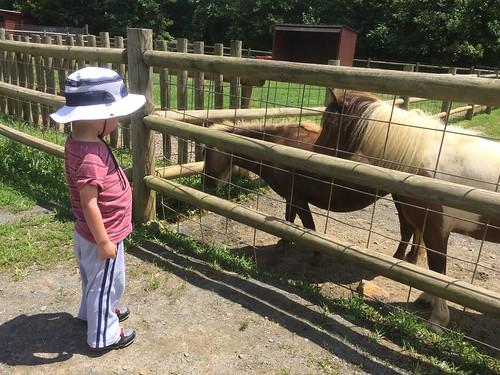 Ponies, Roer's Zoofari