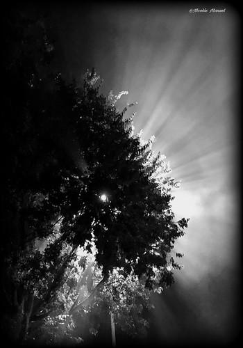 Niebla #iphonex #pintofotografia #niebla #fotosenblancoynegro #iphonefotos #fotosurbanas #niebla