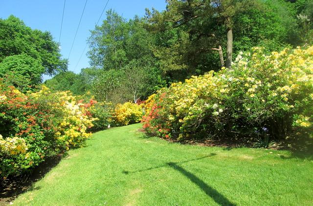azalea walkway