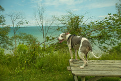 Juneau at Lake Erie Bluffs