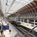 Under the delightful airy roof at Paddington.