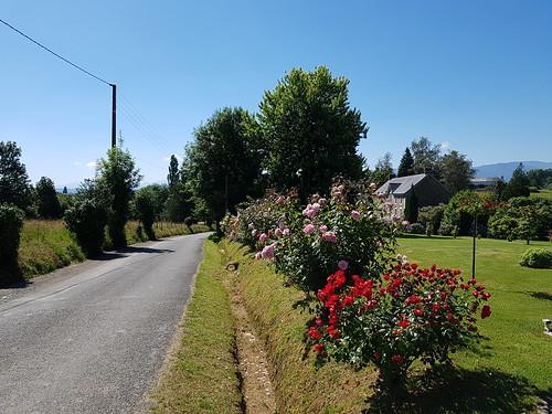 Cascade de rosiers