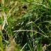 Skipper butterfly on grass leaf