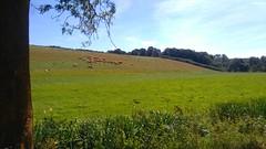 Vue sur la campagne bretonne