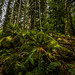 amazing rich, sun-dappled greens of the ferns and moss inside the woods of The Hermitage Pleasure Ground, Dunkeld, Perth and Kinross, Scotland