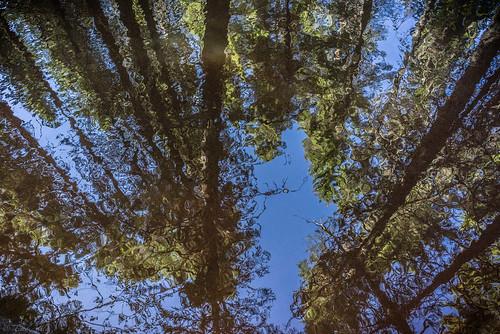 reflection lasikangas ylipää pattijoki raahe finland landscape water trees summer forest