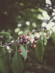 180628-203648 - Fruit Nature Bokeh