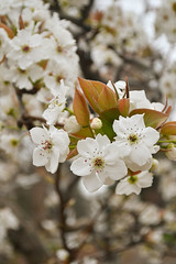 Spring Flowers 08