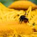 Scotland's Gardens Craigintinney Telferton July 2018 -122