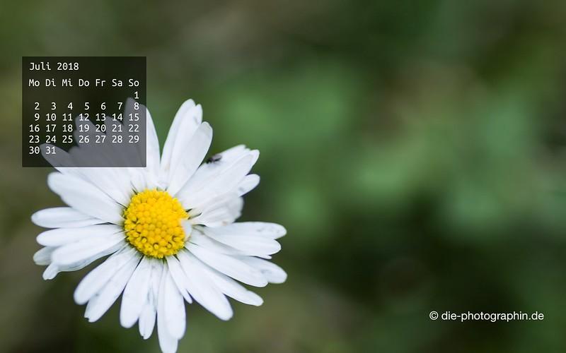 072018-gaensebluemchen-makro-wallpaperliebe-diephotographin
