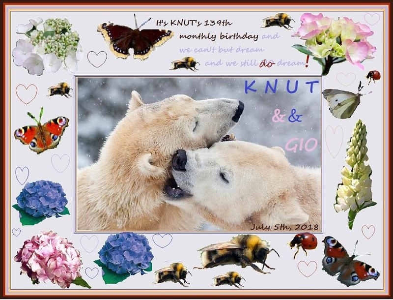 KNUT_139thMonthly_COLLAGE_5Jul2018_05h20_180705