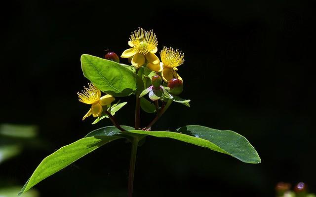 Quel est le nom de cette jolie fleur   . . .  ?