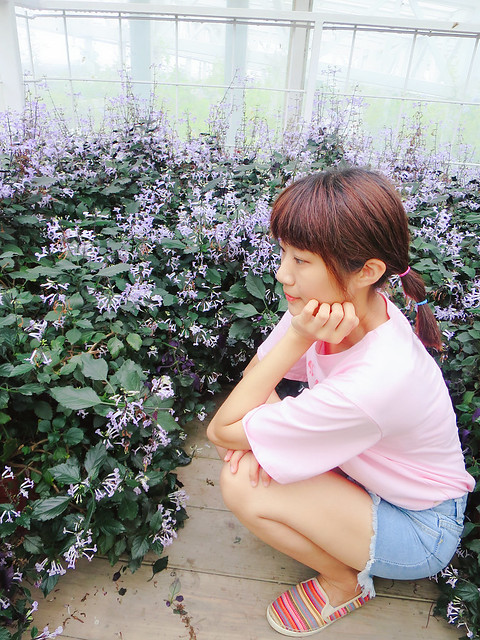 香草菲菲 (25)