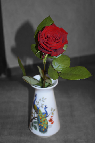 Quando sbocciò la prima rosa musicale mia…