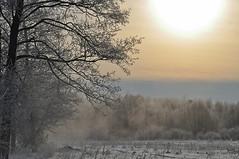 Зима (Winter)