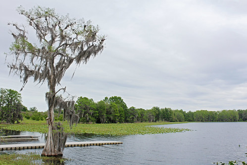 landscape scenery lake water baldcypress trees spanishmoss cloudy overcastsky inverness florida unitedstates