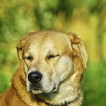 2011-08-30_18-58-01 - Summer Dog