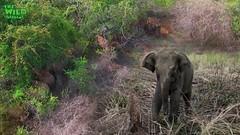 The Elephant Safe Haven: Minneria
