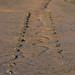 Shoreham Mudflats